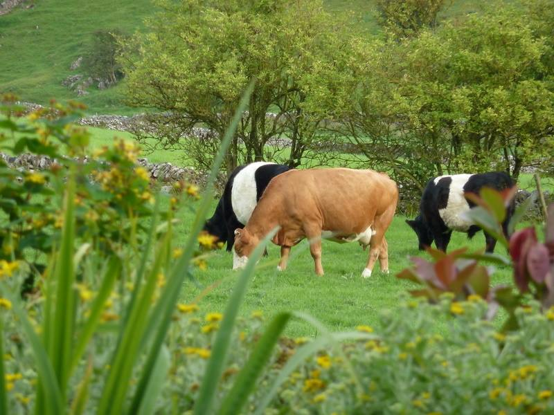 Sit and watch our animals graze on our organic pasture